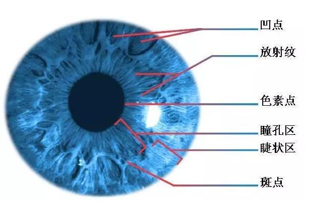 详细剖析虹膜识别技术原理和应用领域