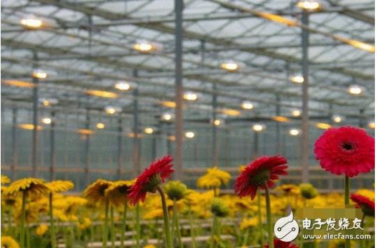 植物补光灯哪种好