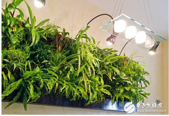 led灯光真的能为植物补光吗
