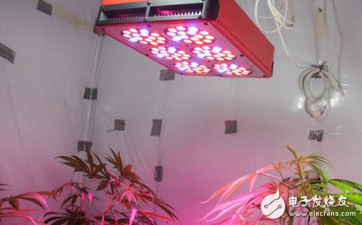 LED植物生长灯的发展前景分析
