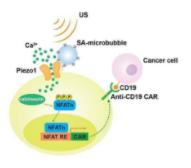 研发遥控免疫疗法 可辨识和杀死癌细胞