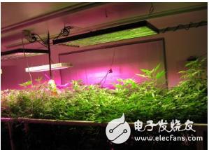 脱欧后英国蔬菜短缺,中国台湾智慧农场的LED植物工厂帮助填补空缺