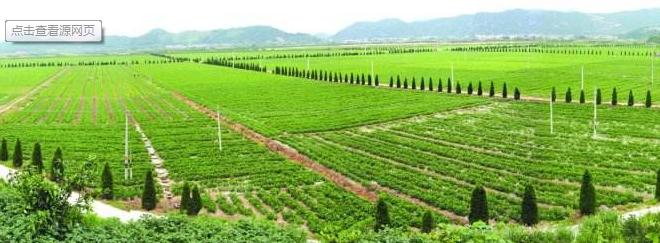 除杂草机器人推动智慧农业发展