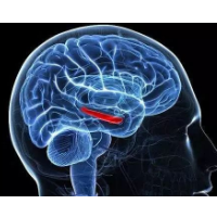 美国莱斯大学开发新型装置:纳米管纤维插入大脑,帮助记录神经元活动