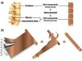 哥大研发一款柔性锂电池可实现在可穿戴设备应用,