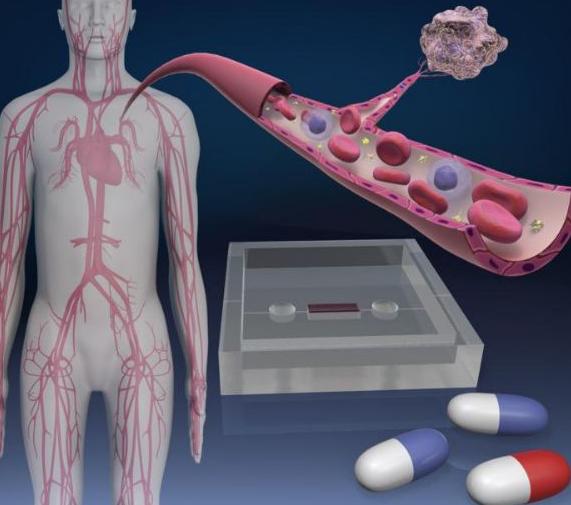 东京大学研发血管芯片 有助开发抑制肿瘤血管新生药...