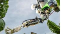 双臂机器人的作用可自动化收割黄瓜