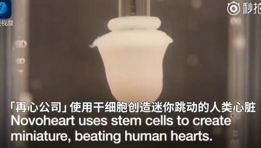 香港大学借助基因工程造出世界首个人造心脏