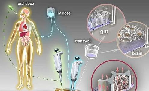 """科学家研发""""人体芯片""""代替动物实验"""