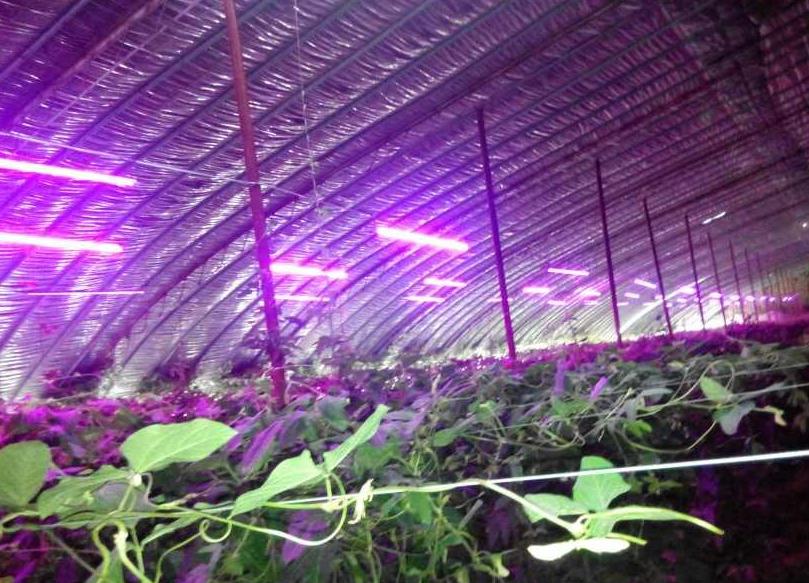 台LED厂转进植物工厂逐见成效 借由LED用于植物灯