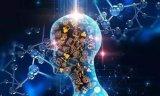 人工智能:可视化深度学习研究基因如何影响生理特征
