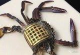 """""""海洋皮肤"""",可以对海洋生物进行更好的追踪的传感..."""