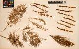 AI与植物学:深度学习助力科学对植物生物多样性的...