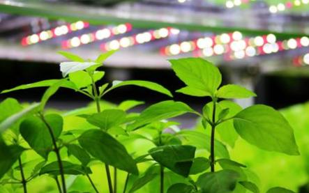 飞利浦照明改善种植作物的品质