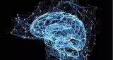 人脑中与学习、记忆和情感相关的区域在成年后依然会...