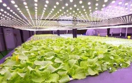 LED通用照明市场竞争激烈,国产化渗透速度加快