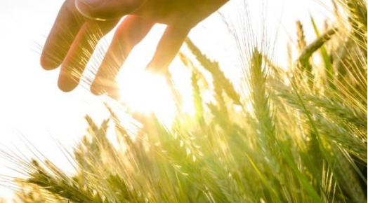 风速传感器在农业气象环境方面的应用