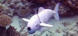 一款软机器鱼——SoFi能够近距离的观察所有的水...