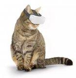 """专门为宠物猫研发的""""猫咪VR""""眼镜来了,家里的猫主子都有了吗?"""