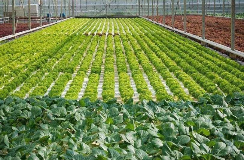植物可穿戴传感器 可检测植物的蒸腾作用