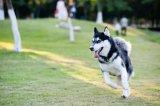 培训人工智能系统:像狗一样思考