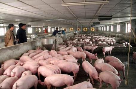 氨气传感器、硫化氢传感器、二氧化碳传感器在禽畜养...