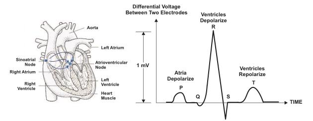 通过使用MSP430G2452微控制器的LaunchPad ValueLine line开发包实现基于心电图的心率监测