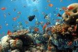 一种能隐身在水下生物中的机器鱼