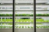 引领智慧农业新方向,加速推进植物照明未来发展