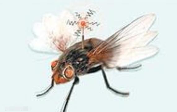 欣赏舞池中飞舞的电子飞蛾