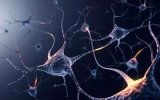 记忆通过神经元间突触的强度变化得到存储