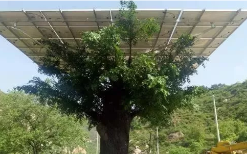 """由省能源局驻村工作队协调帮扶资金购买的两棵光伏树""""栽植""""到骆驼湾村的公路一侧"""