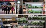 人工光型植物工厂在中国的发展状况