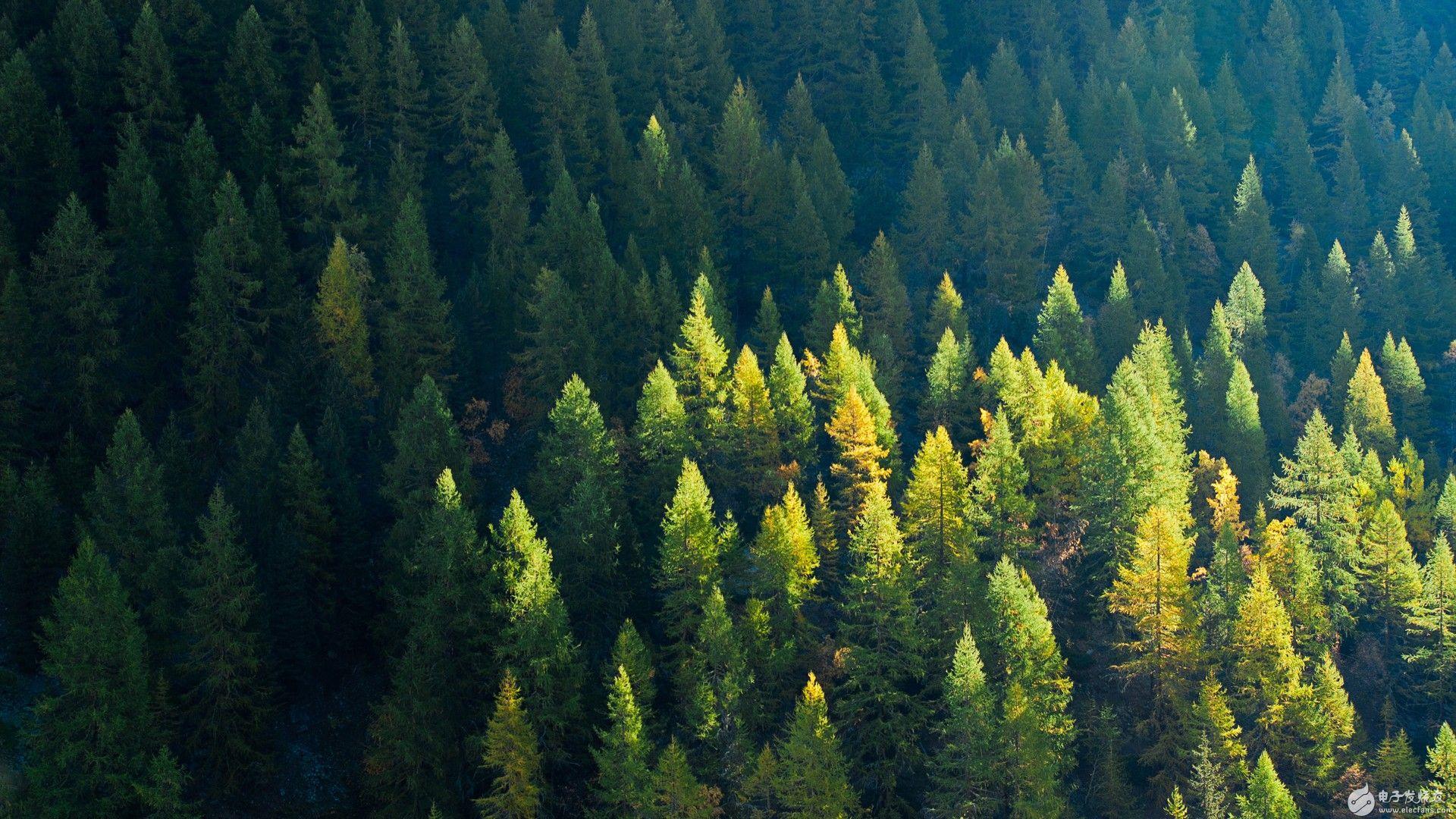 区块链可以保护森林