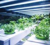 智能LED照明从家居走向商业和农业