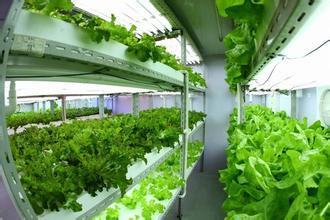 富士康打造全球最大植物工厂,从5月开始就可以吃到自家种植的蔬菜