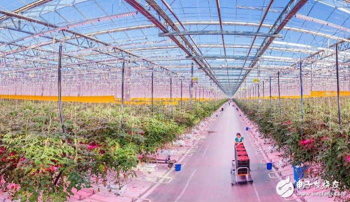 Signify宣布全球最大的LED园艺照明项目将从目前的25公顷扩大到68.5公顷