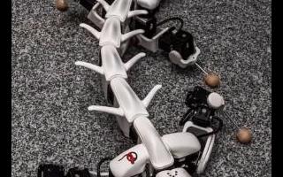 设计团队设计出一款名为Pleurobot的机器人...