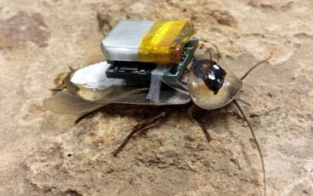 """科学家为蟑螂打造了一套""""盔甲"""",将直接能控制蟑螂..."""