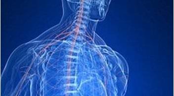 人造感觉神经系统浅析