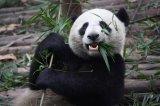 数据处理中最强有力也最流行的工具之一:Pandas!