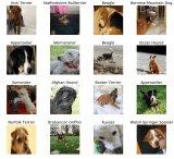 数据集使用的Kaggle中辨别狗狗种类的竞赛