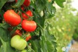 传感器来告诉你农作物何时需要浇水