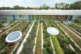 马来西亚力争到2020年创建2万个都市农业型社区