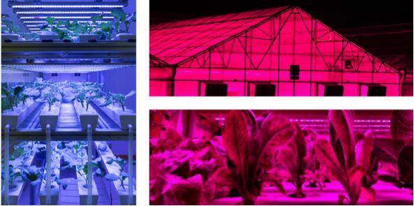 LED -园艺未来的新希望