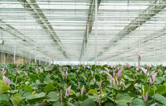 """采用定制LED光配方的""""气雾培""""植物工厂"""