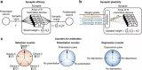 一个拥有100多万台相变存储器器件的脉冲神经网络中对多记忆突触结构进行了实验演示