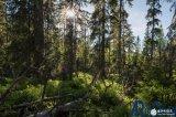 绿色和平组织利用AR技术提高人们对北方森林遭到破坏的认识