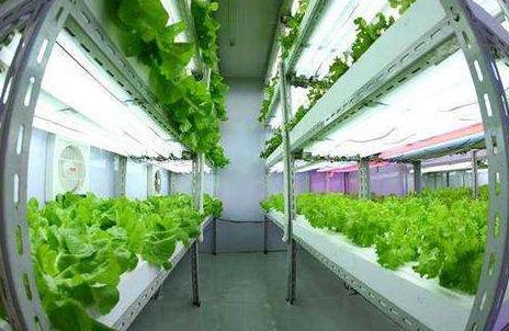 台湾源鲜集团董事长蔡文清:台植物工厂产品将营销到北欧各国,未来将开发北欧市场