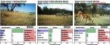 科学家用AI识别和统计野生动物 准确率接近100%